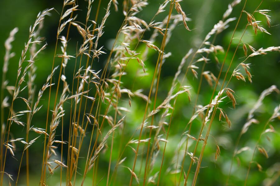 Herbicydy (chwastobójcze)