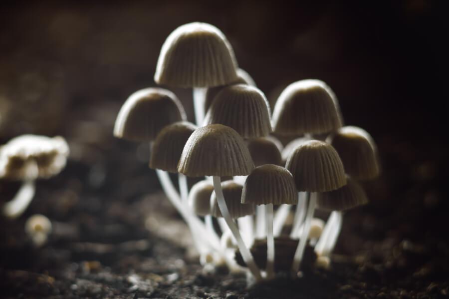 Fungicydy (grzybobójcze)