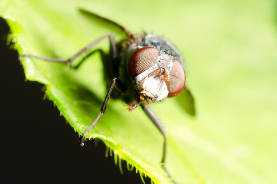 Insektycydy (owadobójcze)